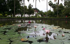 2009-08-23 (lotus)