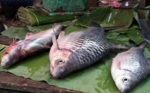 2009-08-23 (peixos mercat)