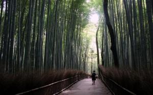 2015-08-11 (Bosc bambu Arashiyama amb Eli)