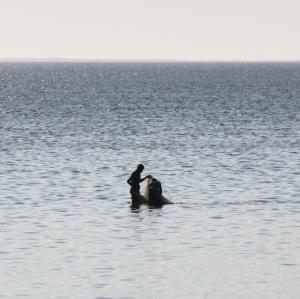2017-07-27 (pescant a Mangily)
